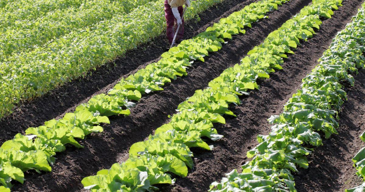 葛飾区で野菜を作りたい