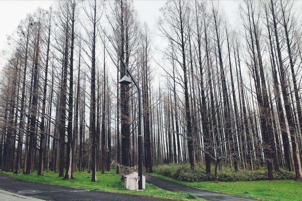 町では見かけない樹が豊富な水元公園