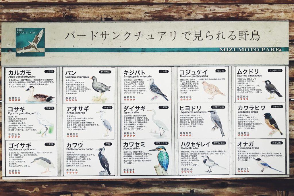 バードサンクチュアリで様々な種類の野鳥を観察できます